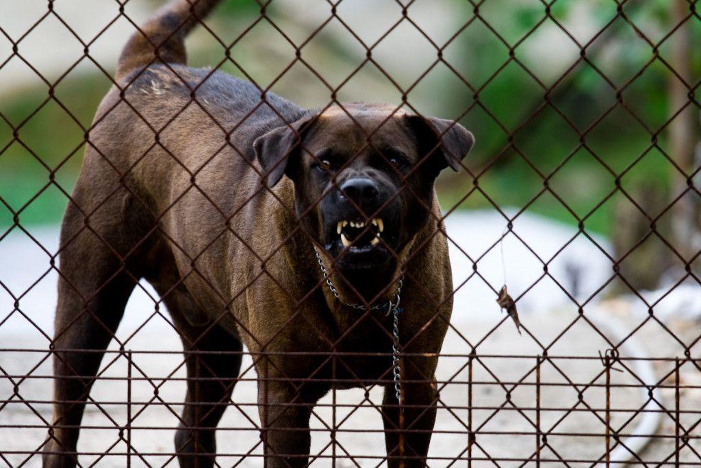 Dog Injury Claim - Spurgeon Law Firm